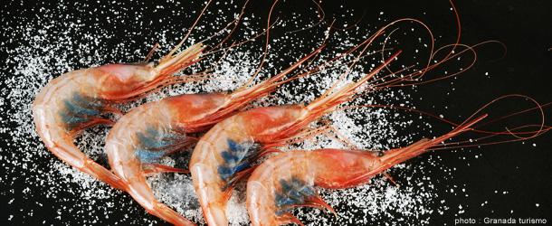 gastronomie-andalousie-espagne