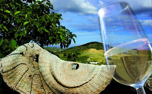 Route des Vins de Montilla-Moriles