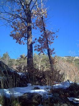 Le Jardin Botanique Hoya de Pedraza - Sierra Nevada, Grenade